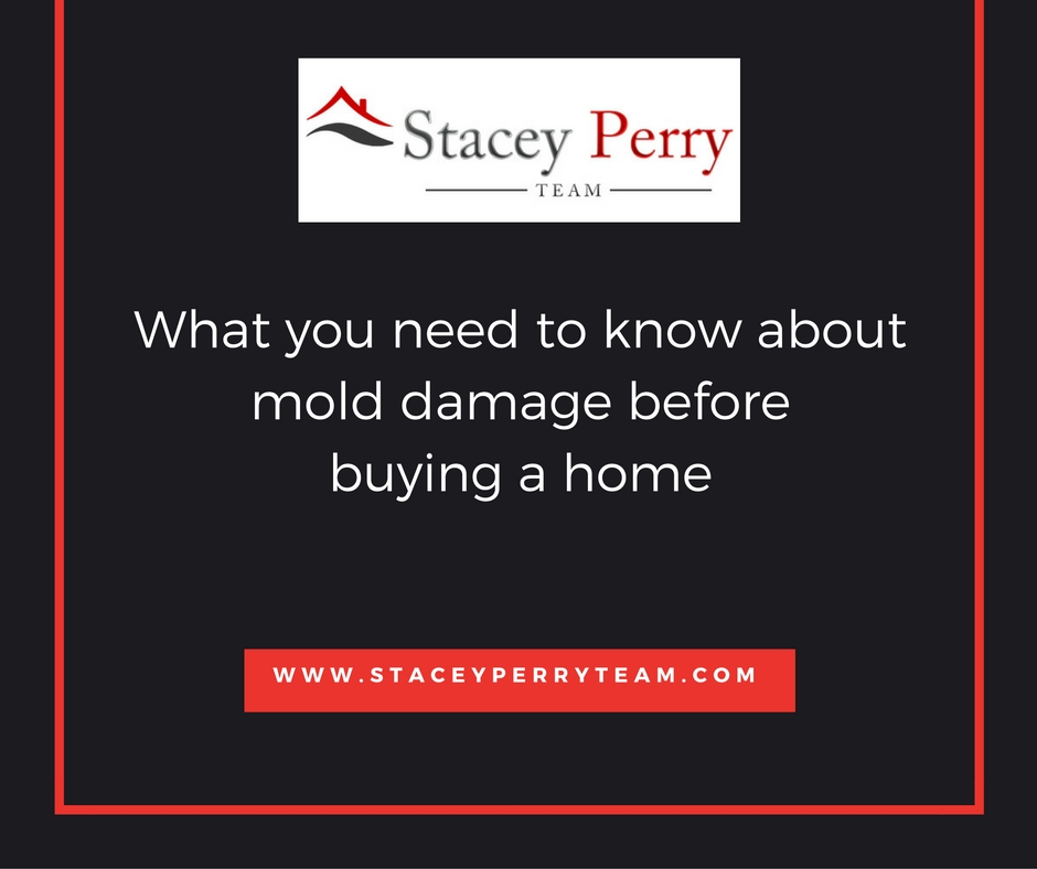 What you need to know about mold damage before buying a for What to do before buying a home